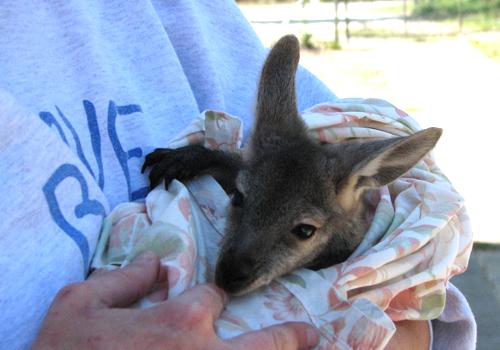Volontariat en Australie et Océanie