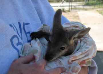 Ecovolontariat Australie