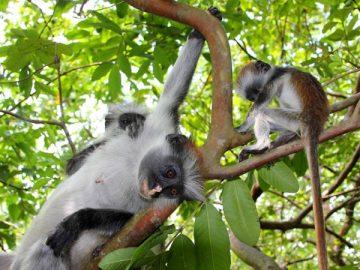 Ecovolontariat Tanzanie