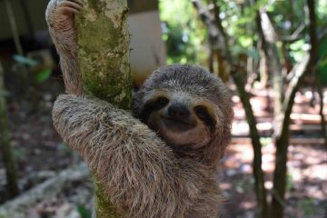 Volontariat avec des animaux sauvages au Costa Rica