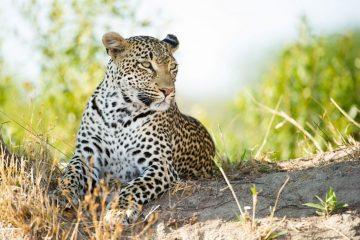 Volontariat animaux sauvages Afrique du Sud