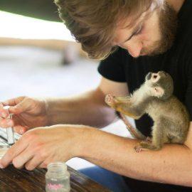 volontariat avec des singes