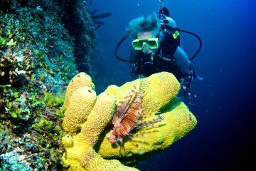 écovolontariat marin
