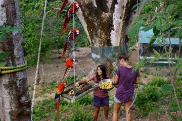écovolontariat au Costa Rica
