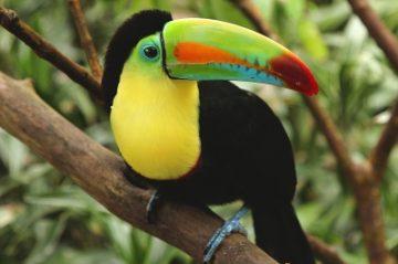 écovolontariat Amérique du Sud