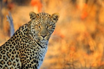 Ecovolontariat en Afrique