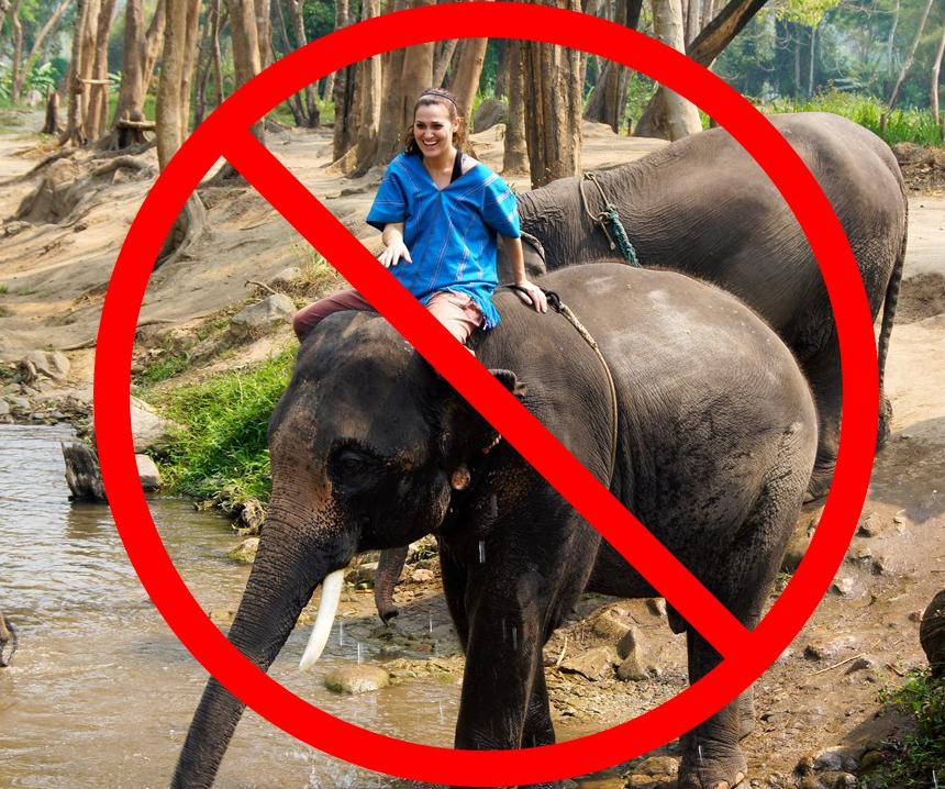 Volontariat dans un sanctuaire d'éléphants en Thaïlande