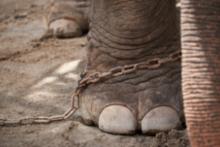 Mise en garde sur les faux sanctuaire d'éléphants
