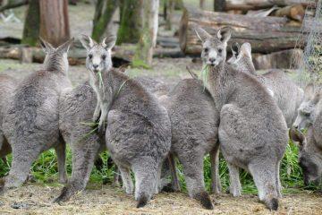 Volontariat en Australie