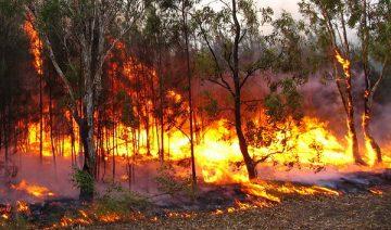 Aide humanitaire en Australie suite aux incendies