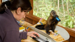 Volontariat en soins animaliers